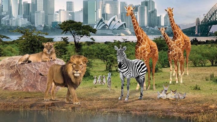Taronga Zoo to Undergo Upgrade   Retail & Leisure International